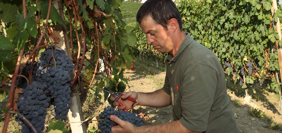 Meet the WineGrower